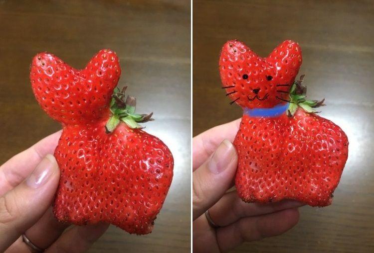 fresa con forma de gato