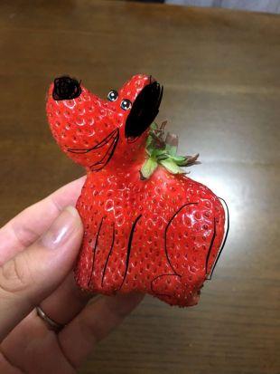 Fresa-gato-12