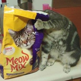 gato de portadas